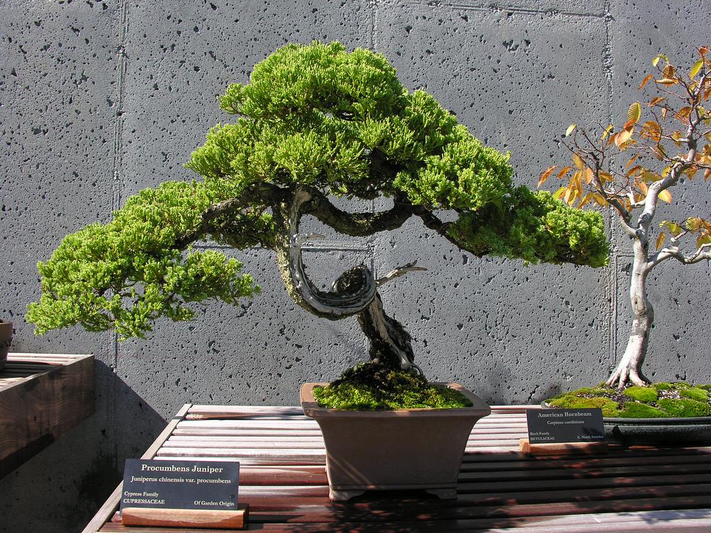 Японское дерево своими руками фото 360