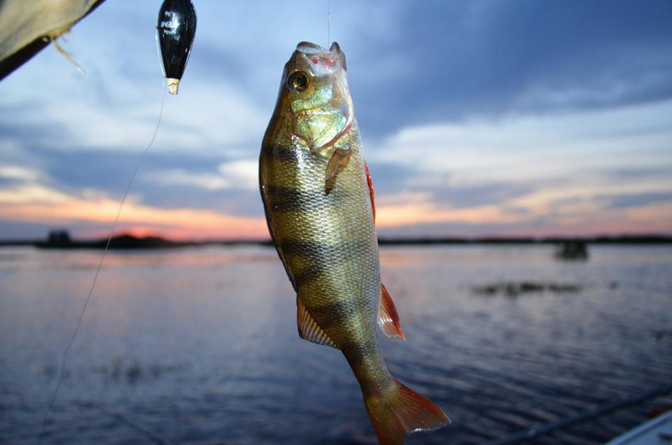 рыбалка самая большая рыба на удочку