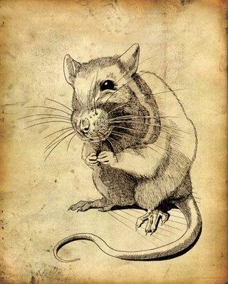 Татуировка Крыса